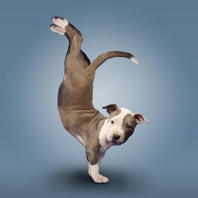 Yoga Puppy