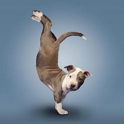 Yoga Puppy